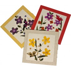 Flower Cards - Butterfly (assorted pack of 6 cards)